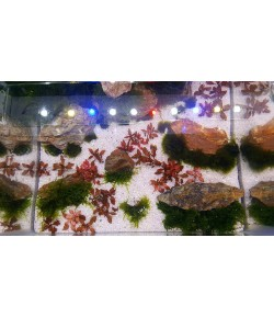 Arena Silice Sustrato para todo tipo de acuarios de agua dulce
