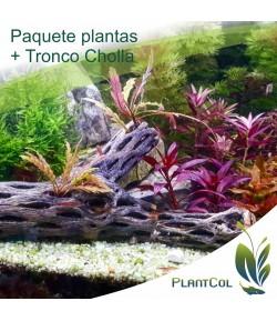 Tronco de Cholla + paquete de plantas