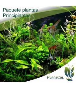 Paquete de plantas para principiantes