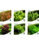 Paquete Plantas Acuáticas Naturales Contraste Acuario