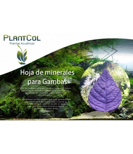 Hoja de minerales para Gambas