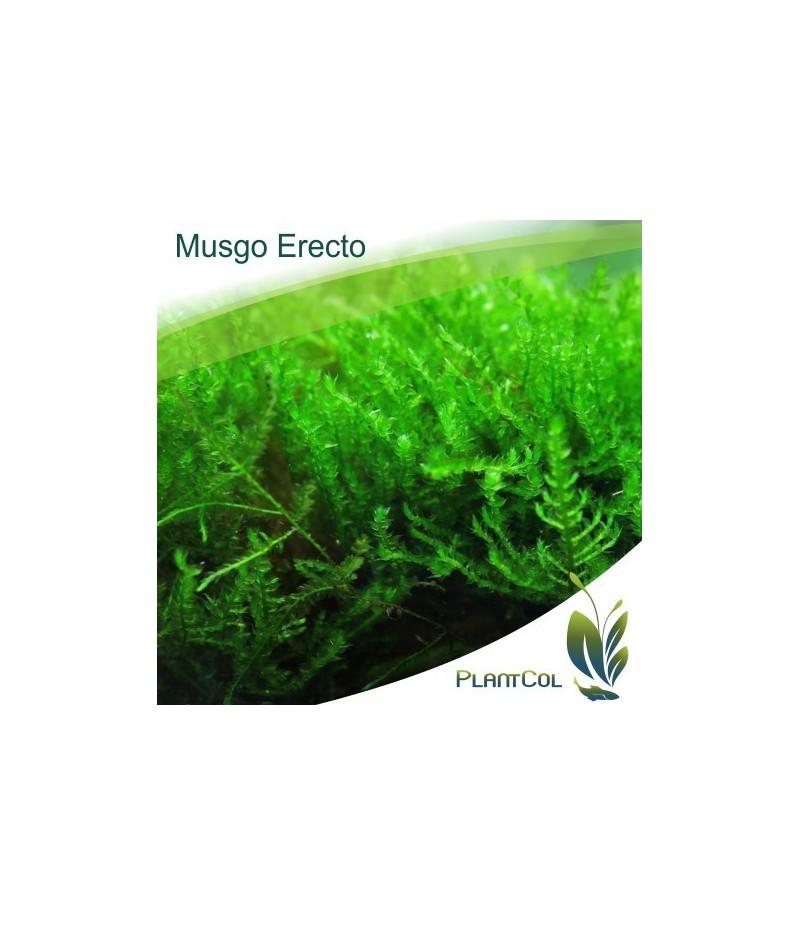 Plantar Musgo. Musgo Sphagnum Modulos Para Plantar Un X X Cm With ...