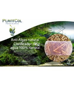 Paja de Cebada anti-algas