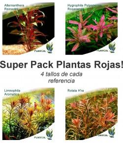 Paquete Plantas Rojas No. 2